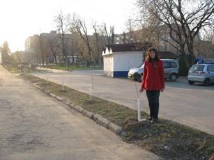 сорок саженцев Дергачева.JPG